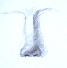 Learn how to draw nose - demo 5