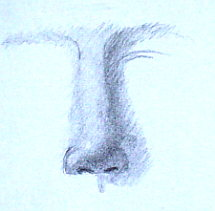 Learn how to draw a nose - demo 6