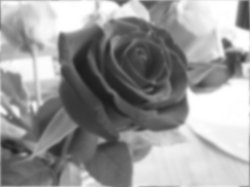 drawing roses  seeing the values in gray scale