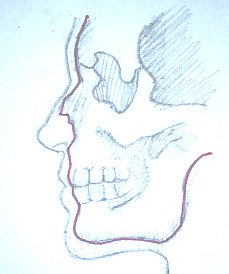 Learn how to draw a nose - nose is made of cartilages
